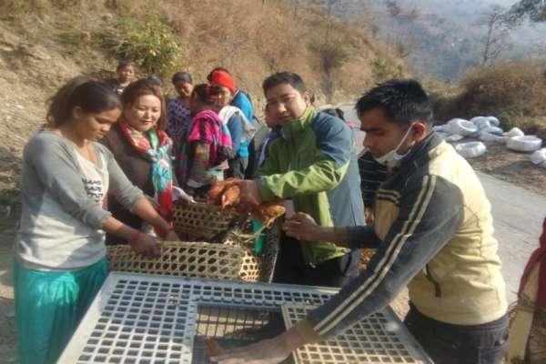 पाँचथरमा सुआहारा र नेपाल जनउद्धारले वाढ्यो उन्नत जातका कुखुरा