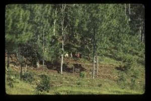 जाजरकोटमा सल्ली वन विनाश,जिल्ला समन्वय समितिको आपत्ति