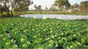 खोटाङ्गमा प्रधानमन्त्री कृषि आधुनिकीकरण परियोजना लागू