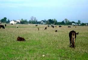 संरक्षण नहुँदा बिभिन्न जिल्लाका बिमानस्थलहरू गौचरनमा परिणत